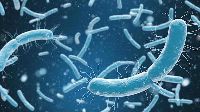 sifiliz frengi nedir