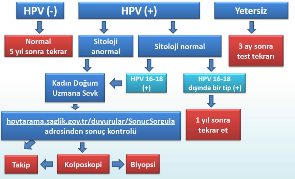 hpv tipleri
